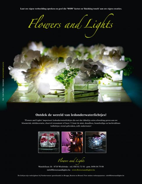 Flowers and Lights Tomas De Bruyne